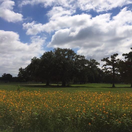 field of petals
